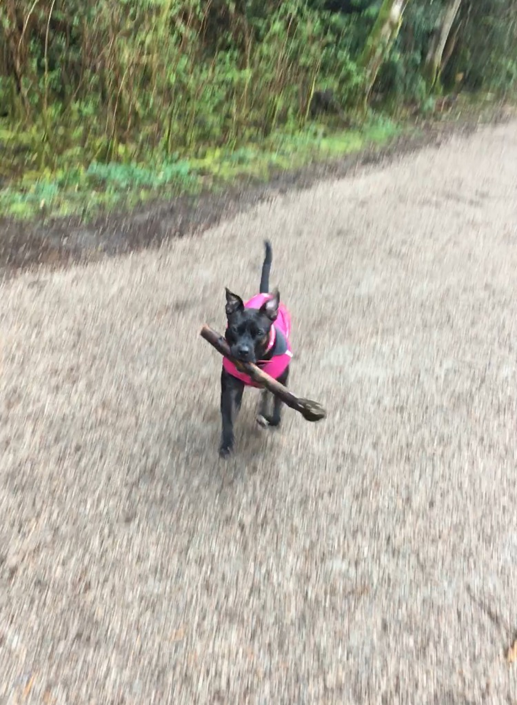 mia stick