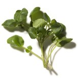 Calories: 4 per cup A cleansing cruceriferous vegetable with the fresh crunch of salad greens and the powerful cancer-fighting properties of Brussels sprouts and broccoli, watercress contain sulforaphane and other compounds linked to lower disease risks. Studies suggest that people who regularly eat these vegetables might also be protected from lung cancer.