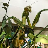 Backyard Monsters and Dinosaurs Exhibition @ Maritime, Putrajaya