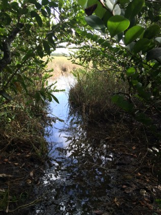 tree-island-florida-everglades