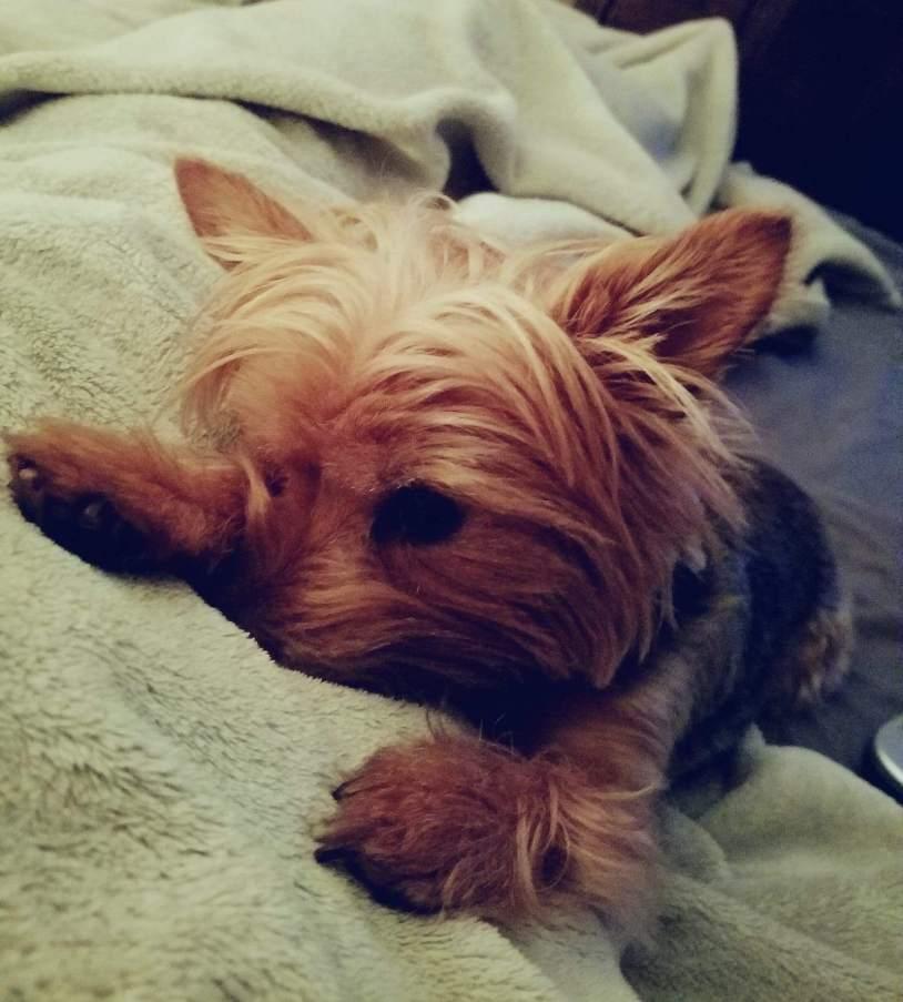 Mom.. let me sleep!