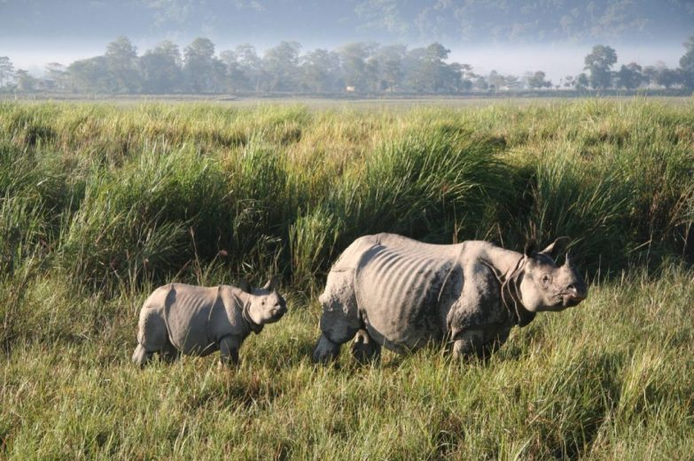 Donate to Kaziranga
