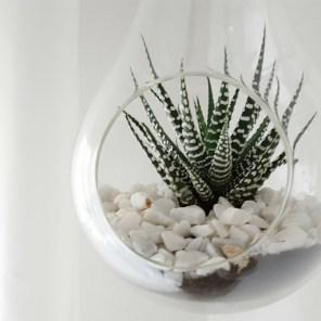 Sukkulenten in der Glasglühbirne