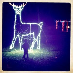 little kid big reindeer