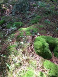 softest moss in the world