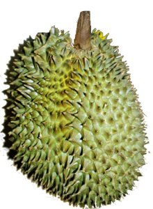 durian-fruit-33-week-baby-size