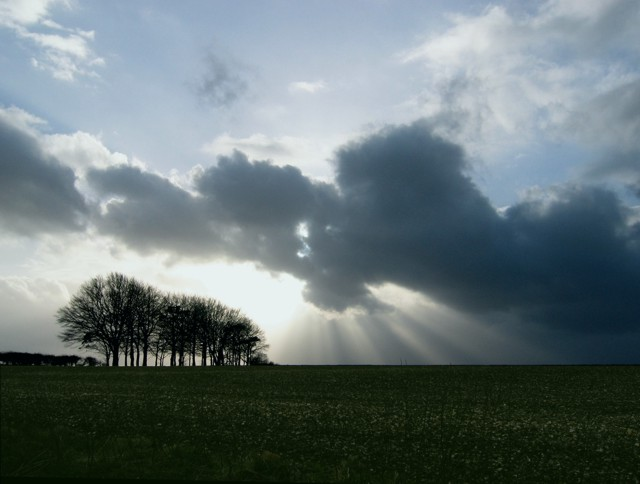Clump_of_trees_with_sun_rays_below_the_clouds_-_geograph.org.uk_-_728841