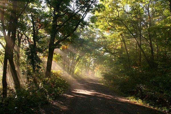 sunshine through the trees