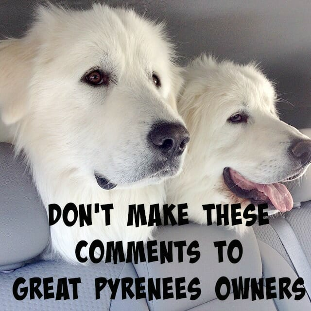Has anyone ever made any of these comments to you about your Great Pyrenees? What did you think?