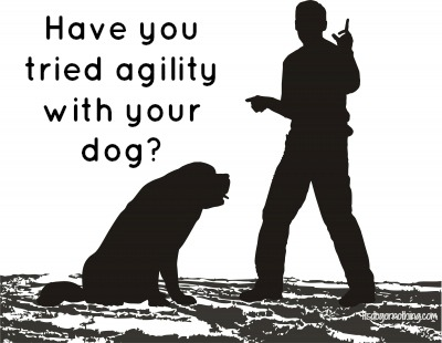 Agility: Is it For Every Breed?