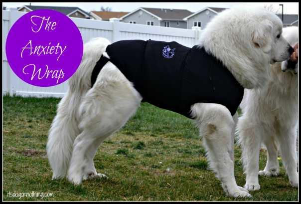 Great Pyrenees - Anxiety Wrap
