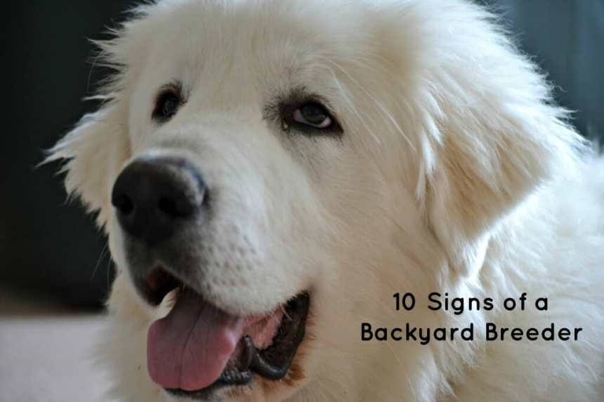 10 Signs of a Backyard Breeder