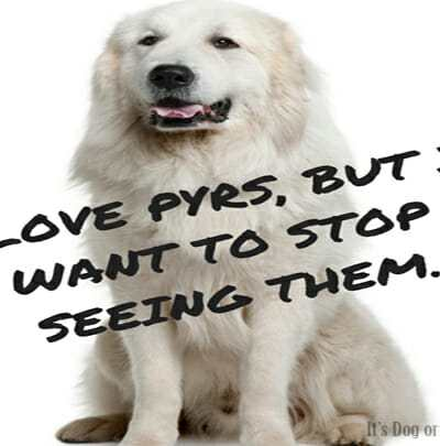 Great Pyrenees in the Media