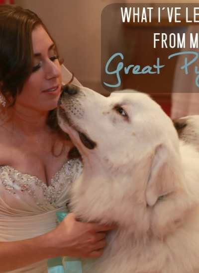 What I've Learned from My Great Pyrenees