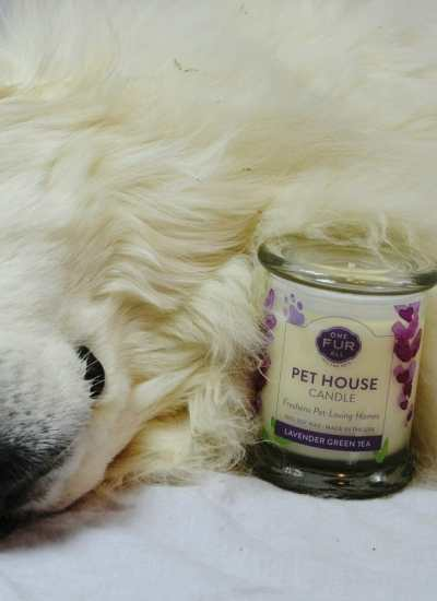 Pet House Candles for Dog Health