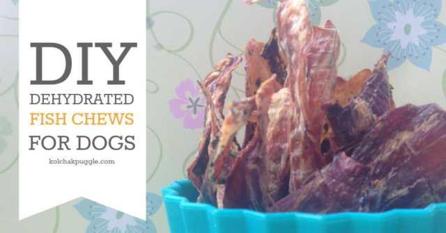 dehydrated-fish-dog-treat-recipe-FB-1024x536