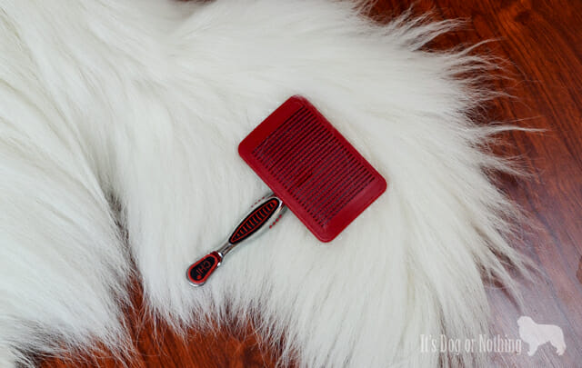 Great Pyrenees with #CHIforDogs dog grooming slicker brush