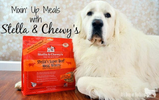 Need a healthy, yet delicious way to mix up your dog's meals? Try Stella & Chewy's Meal Mixers for a nutritional boost!