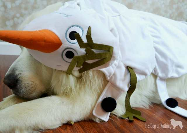 We're celebrating Halloween Great Pyrenees style with toys, treats, and costumes from PetSmart!