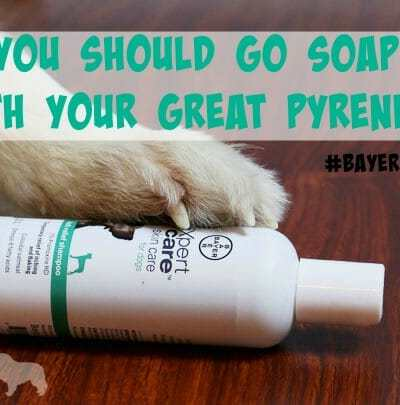 Why You Should Go Soap-Free with Your Pyrenees #BayerExpertCare
