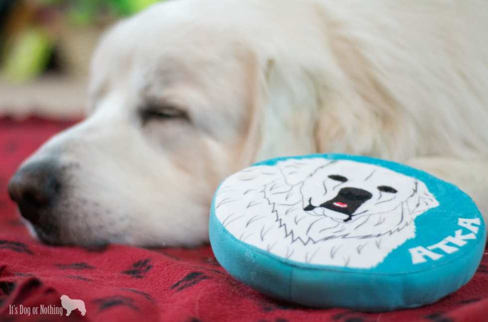 Have you tried the personalized pet products from #PrideBites? Not much better than a custom frisbee with a handsome Great Pyrenees on it! Check out why we love PrideBites and their appearance on ABC's Shark Tank!