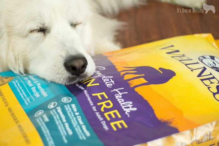 An interesting encounter really made me think about how I feed my dogs. Here's why I feed my Great Pyrenees grain-free dog food #GrainFreeForMe