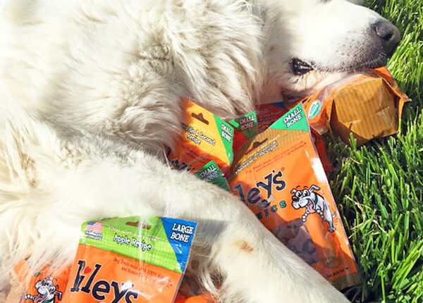 Pet Paw-Looza | Riley's Organics with Great Pyrenees