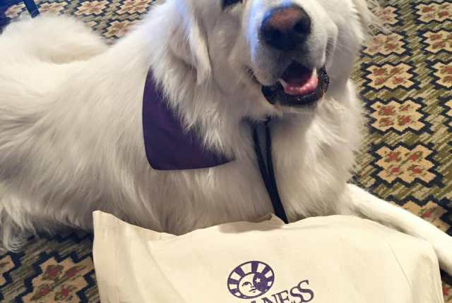 Great Pyrenees and Wellness Pet Food at BlogPaws 2016
