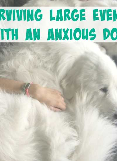 Surviving Events with an Anxious Dog