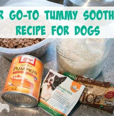 Our Go-To Tummy Soothing Recipe for Dogs