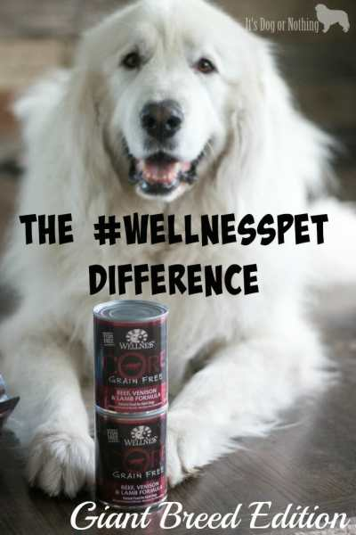 """Do you feel completely comfortable with the food you are feeding your giant breed dog? While we feed a rotation diet that includes """"all life stages"""" foods, large breed formulas are great for peace of mind about nutrients. Check out our preferred large breed formula!"""