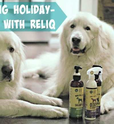Getting Holiday-Ready with RELIQ