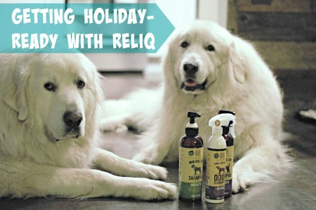 It's Dog or Nothing   Getting Holiday-Ready with RELIQ