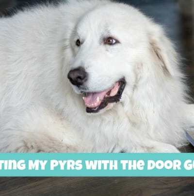 Protecting My Pyrs with The Door Guardian