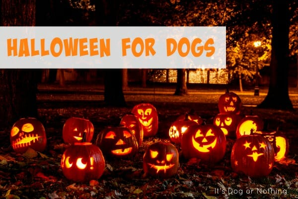 How are you spending Halloween with your dog? Halloween can be a lot of fun or extremely stressful. We've rounded up some ways to make it a great time of year!