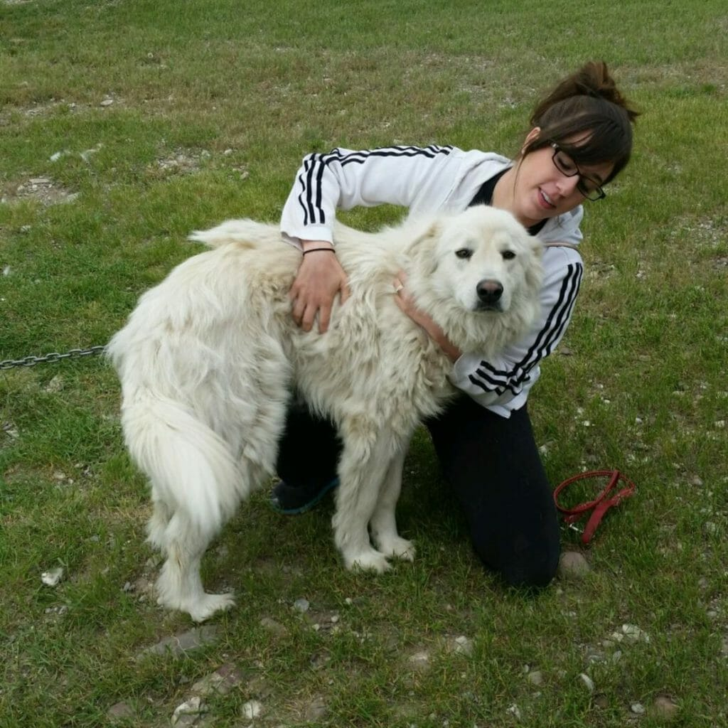 Bella | Great Pyrenees Rescue| It's Dog or Nothing