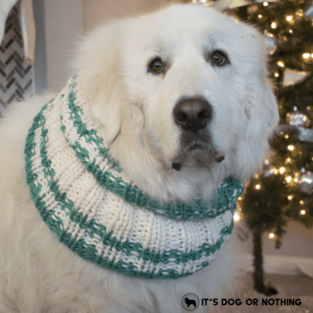 It's cold outside, and what better way to keep warm than chunky scarves that you can match to your dog? Enter to win a custom scarf from Johnny Knitsville on It's Dog or Nothing!