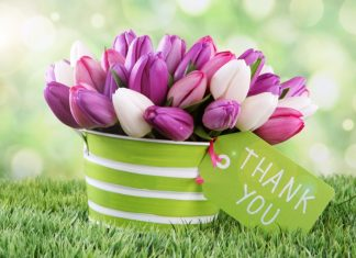 Thank-You-images-with-tulip-flower-hd-images-pics-free