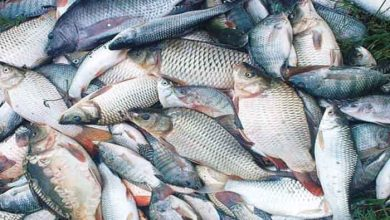 Photo of The Formalin-in-fish row in Goa continues to haunt the public