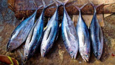 Photo of FDA raid at Goa's major fish markets, Formalin found in fish