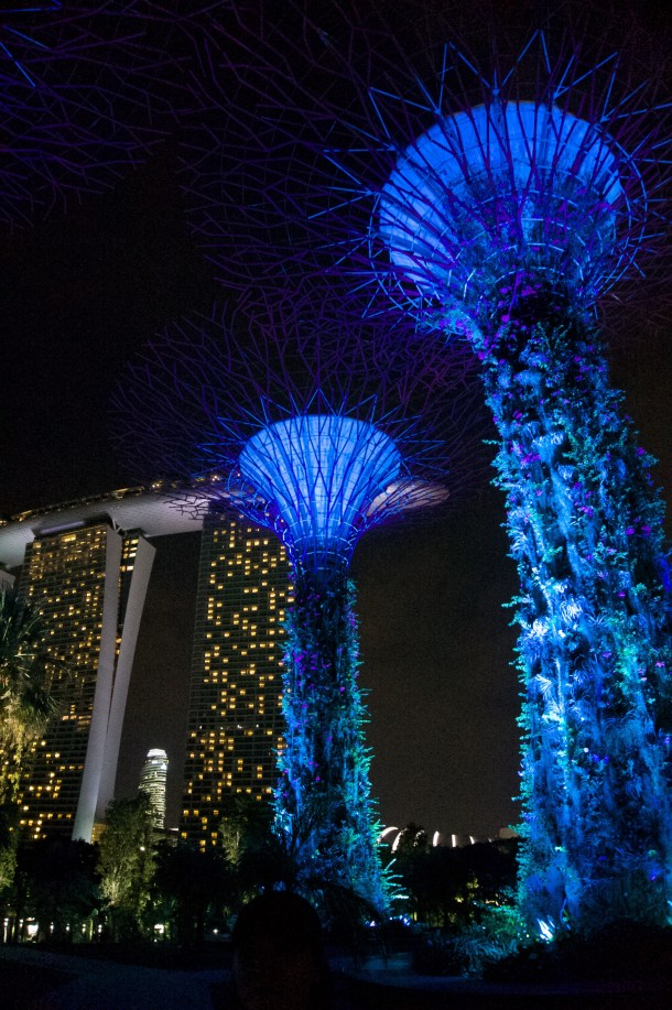 These trees light up in sync with the music!