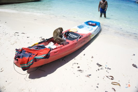 Monkeys at Monkey Bay!
