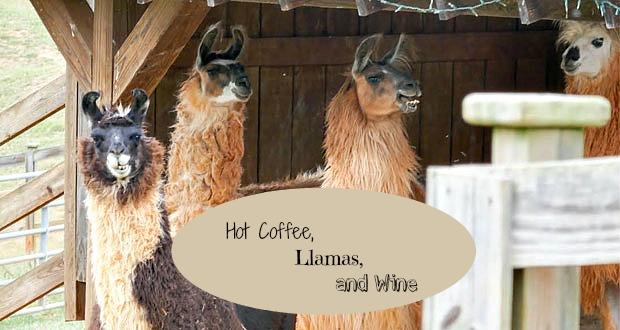 llama-feature
