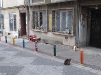 Cat Gangs of Istanbul