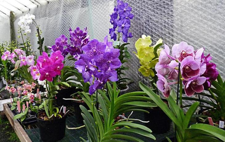 orchid paradise