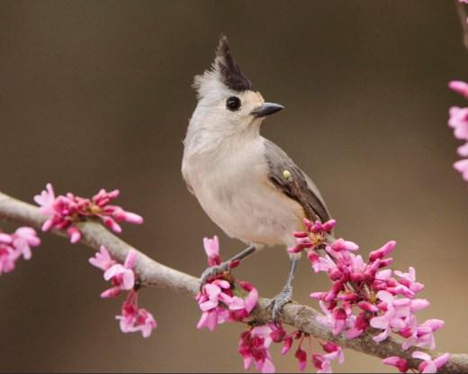 beautiful-best-birds-hd-widescreen-desktop-free-download-wallpapers-2012
