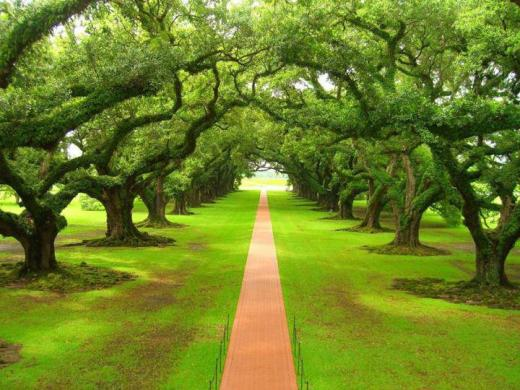 World-Best-Natural-scene-Tree-Path-green-color-picture 2013 2014