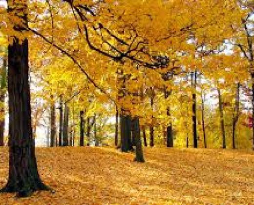 autumn-season-natural-high-resolution-desktop-backgrounds-2013-2014