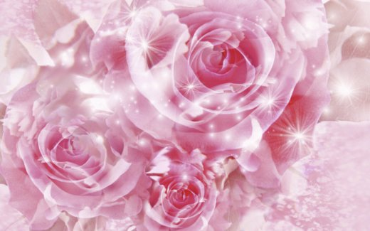 pink-rose-flower-background for Iphone5