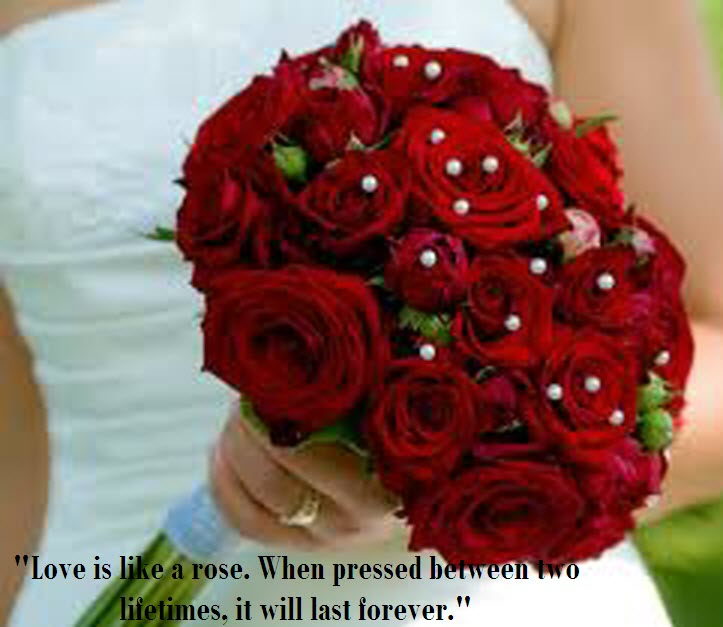 Latest Most Beautiful Red Rose Pictures with Romantic Love Quotes –  itsmyviews.com